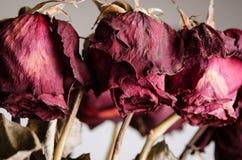Umierający Różanego bukieta zakończenie Up Zdjęcia Stock