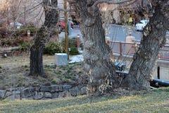 umierające drzewa Fotografia Royalty Free