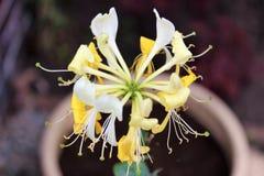 umierający kwiat Zdjęcia Royalty Free