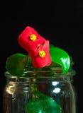 Umieszczali w terrarium Botanicznym laboratorium włókienna begonia lub wosk begonia () Obrazy Royalty Free