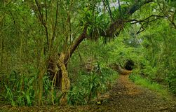 Umlalazi自然保护 库存照片