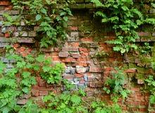 Ummauern Sie überwucherte, alte Backsteinmauer, Hintergrund, Beschaffenheit, altes verdünntes Lizenzfreie Stockfotografie