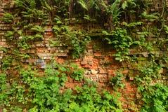 Ummauern Sie überwucherte, alte Backsteinmauer, Hintergrund, Beschaffenheit, altes verdünntes Stockbild