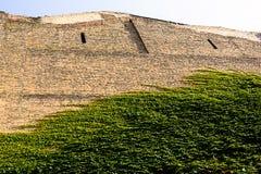 Ummauern Sie überwucherte, alte Backsteinmauer, Hintergrund, Beschaffenheit, die alte verfallene Backsteinmauer, die mit Gras übe Stockfoto