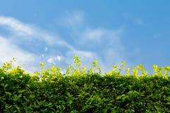 Ummauern Sie grüne Blätter und Himmel mit Raum für Text Lizenzfreie Stockfotografie