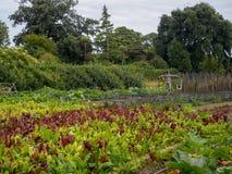 Ummauerter Garten-Gemüseflecken stockbilder