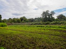 Ummauerter Garten-Gemüseflecken stockfoto