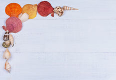 Ummer semestrar bakgrund med snäckskal och ett utrymme för annonsering Arkivfoto