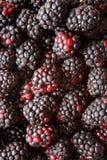 Ummm berries Stock Photo