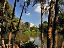 Umong-lago de Wat em Chiang Mai Fotos de Stock Royalty Free