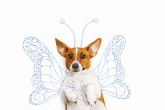 Umor picture the cute puppy high top view lying on light backgro. Jack russell terrier with drawing butterfly wings and flower. Humor picture with cute puppy Royalty Free Stock Images