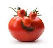 Umore allegro del sig. Tomato di arte Fotografia Stock Libera da Diritti