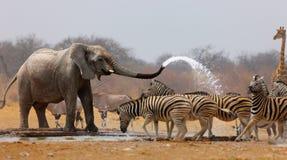 Umore animale fotografie stock libere da diritti
