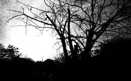 Umore d'autunno Fotografie Stock Libere da Diritti