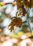 Umore di autunno Fotografie Stock Libere da Diritti