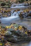 Umore di autunno al ruscello Fotografia Stock