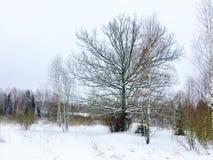 Umore di inverno Immagine Stock Libera da Diritti
