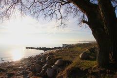 Umore di inverno sulla spiaggia adorabile a febbraio Immagine Stock