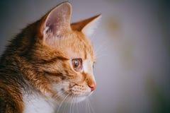 Umore di sorveglianza Fotografie Stock