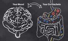 Umore e batteri dell'intestino Immagini Stock