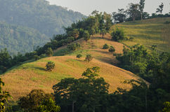 Umphangkee hill Stock Image