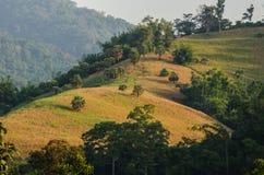 Umphangkee wzgórze Obraz Stock