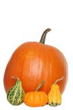 Umpkin and gourds Stock Photo