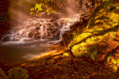 Umpqua Forest Waterfall i Oregon Arkivbilder