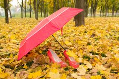 Umrella and shoes. Woman pink shoes and pink umbrella on Fall leafs stock images