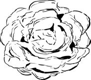 Umrissene Kopfsalat-Zeichnung Lizenzfreies Stockbild