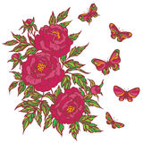 Umrissenes rosa Bündel Pfingstrosen-Blume und Schmetterlinge Lizenzfreie Stockfotografie