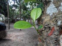 Umwelt des bangladeschischen Dorfs Stockfotografie