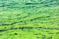 Umwelt mit verunreinigten grünen und gelben Wasser Lizenzfreies Stockfoto