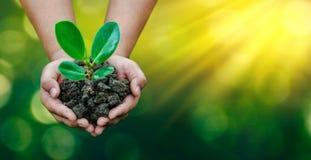 Umwelt-Tag der Erde in den Händen von den Bäumen, die Sämlinge wachsen Bokeh grünen die weibliche Hand des Hintergrundes, die Bau lizenzfreies stockbild