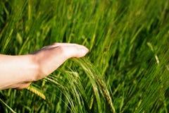 Umweltbewegung lizenzfreies stockfoto