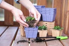 Umweltfreundliche T?pfe f?r S?mlinge Papiert?pfe mit Blumen Frauenpflanzen Blumen Betriebstransport stockbilder