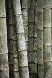 Umweltfreundliche tropische Bambusbaum-voller Rahmen-Vertikalen-Hintergrund Stockbilder