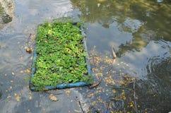 Umweltproblem, Abwasser, industrielles Abwasser Stockbild