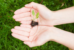 Umweltschutz Stockbild