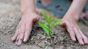 Umwelttag der erde in den H?nden von den B?umen, die Holdingbaum der S?mlinge weiblichen Handauf Naturfeldgras-Walderhaltung wach stock video footage