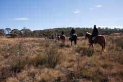 Umwelttourismuspferdenmitfahrer im australischen Busch Lizenzfreie Stockfotos