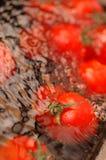 umyć pomidorów zdjęcie stock