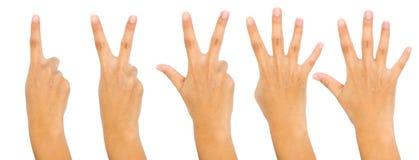 Un à cinq doigts comptent des signes d'isolement sur le fond blanc photographie stock libre de droits