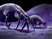 Un ácaro común del polvo libre illustration