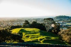Un ámbito de la colina del árbol Fotografía de archivo libre de regalías