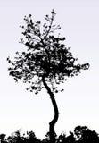 Un árbol Fotografía de archivo libre de regalías