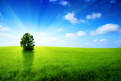 Un árbol Imagen de archivo libre de regalías