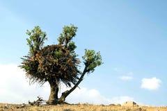Un árbol agradable Imagen de archivo libre de regalías
