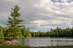 Un árbol al borde de un lago Imagenes de archivo