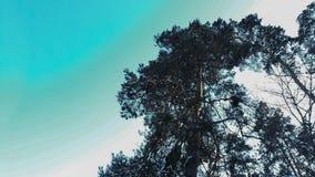 Un árbol alto imagenes de archivo